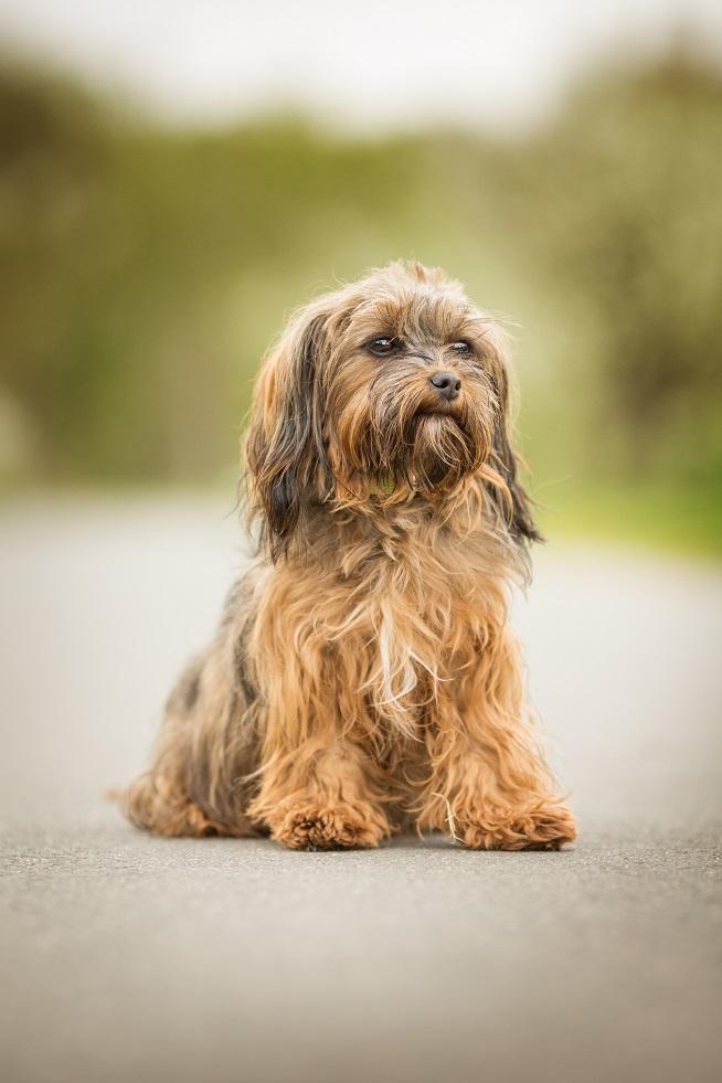 presswehen hund wie lange